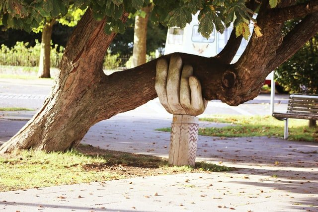 Lending a hand. Image of tree trunk being help up by statue shaped like a hand